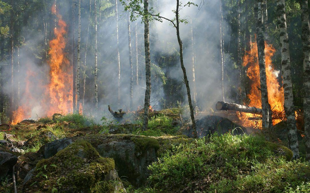 Cómo evitar incendios forestales. (II)